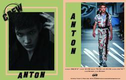 Anton   66631311