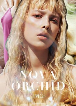 Nova Orchid   64467069