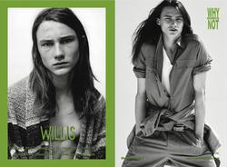 Willis    45558015