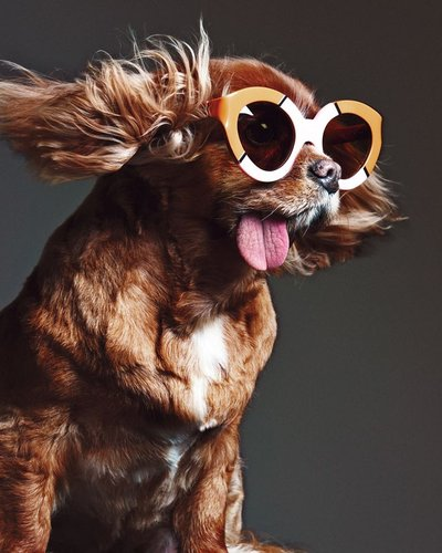 Toast - Ph: for Karen Walker Eyewear S/S 15